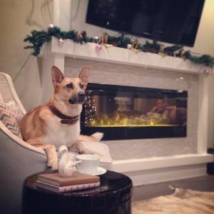 Dog, Christmas Decorations
