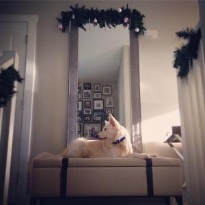 Dog, Bench