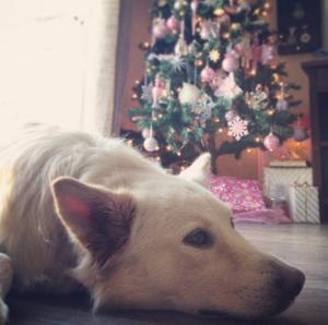 Dog, Christmas Tree