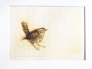 Wren Print on Wood by Bridget Farmer (Australia)